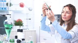 科学家,植物学家,研究,女科学家研究员看着管中的植物样品视频素材