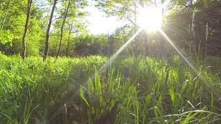 草地,低空,阳光,踏青,航拍,清新,阳光灿烂草地低空拍摄视频素材