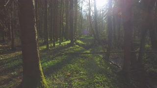 阳光,深林,清晨,清新,低空航拍早晨美丽的透过阳光森林视频素材