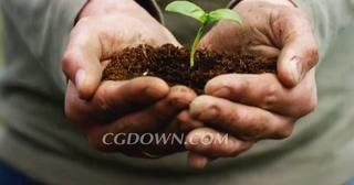 种植,播种,生活,传播,传递,一个人人工手上拿着新芽种植地面概播种爱新的生活。视频素材