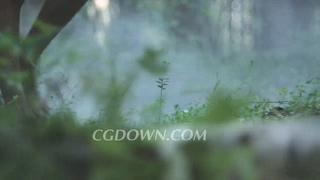 女孩,赤脚,森林,草地,视频素材