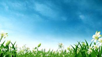 春天,蔚蓝,盛开花朵,无缝循环五