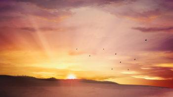 飞行的小鸟,升起的太阳,移动的云朵,温馨,无缝循环五
