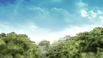不断移动的树木,森林,蓝色天空,无缝循环五