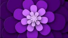 紫色,花瓣,转场