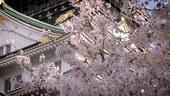 东京大阪,东京古代建筑,桃花,樱花