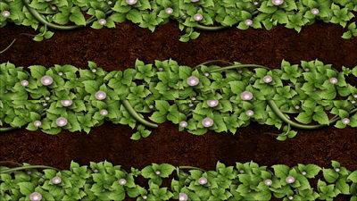 生长的绿色植物,无缝循环十一,免费