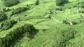 种植,农业,梯田,稻田,航拍,视频素材
