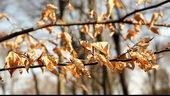 枯叶,萎缩,黄叶,秋季,秋天
