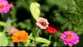 蜜蜂采蜜,蜜蜂,采蜜