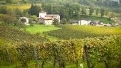 葡萄,葡萄园,庄园,葡萄酒,视频素材
