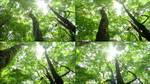 健康,树干,茂盛,枝繁叶茂,自然,绿色,森林,大树,树木,阳视频素材