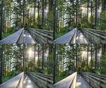 时间流逝,森林小道,绿色植物,阳光照射