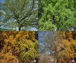 大树,枝叶,季节变化,枝繁叶茂,生机盎然,枝叶,长出绿叶,焕发生机,人生如此