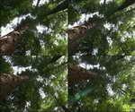 森林,阳光,树林,太阳,参天大树,树干,枝繁叶茂