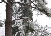 雪景1,雪花飘飘,银装素裹,