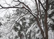 雪景3,雪花飘飘,树挂