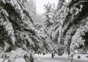 雪景4,雪花飘飘,银装素裹