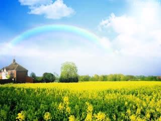 油菜花,彩虹,蓝天白云