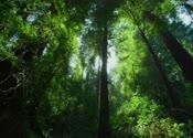 绿色森林,树木,阳光,春天