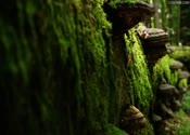 高清,天然氧吧,原始森林,森林,树木