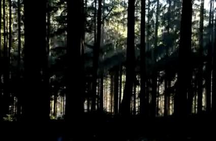 高清,古老树木,古老森林,时间变化,自然景像