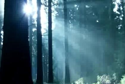 高清,自然风光, 森林,意境森林,蓝光,早晨