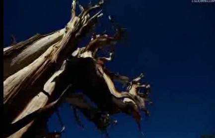 高清,古树,百年老树,时间 变化