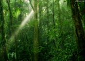 森林,树林,早晨,绿色,高清,茂密,视频素材