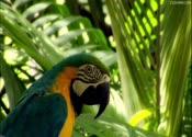 鹦鹉,树林,鸟儿,高清,视频素材