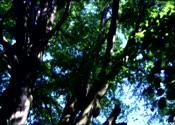 树叶,树枝,茂密,树林,春天,高清,视频素材