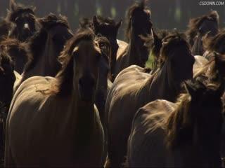 草原上奔跑的马儿特写,万马奔腾