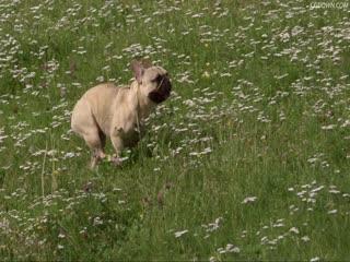 高清草原上跑的小狗,奔跑的小狗,花丛